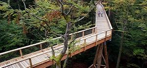 Baumwipfelpfad im Nationalpark Bayer. Wald